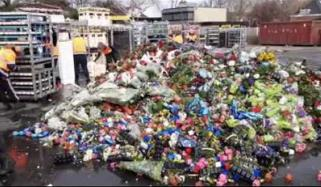 کورونا: ہالینڈ میں پھولوں کی تجارت کو شدید نقصان