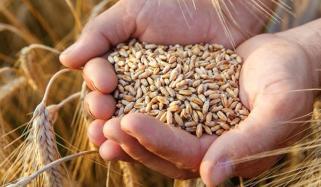 پنجاب حکومت کا کاشتکاروں سے گندم 1400روپے فی من خریدنے کا اعلان
