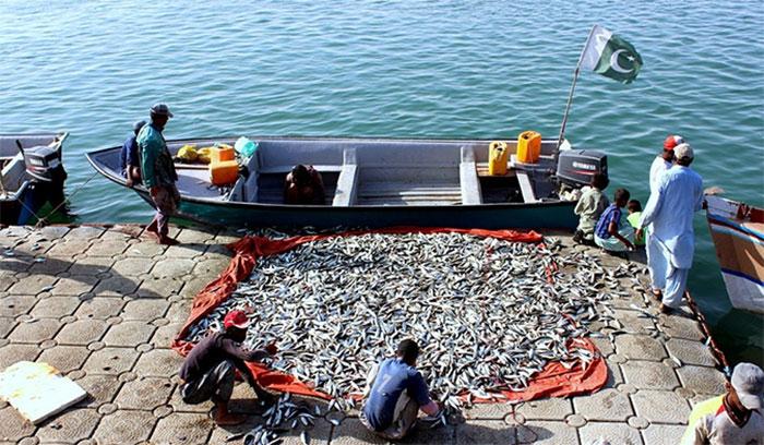 کوسٹ گارڈزنے چھوٹے ماہی گیروں کو مچھلی پکڑنے کی اجازت دے دی