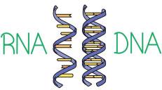 کورونا وائرس اور ادویہ ساز ادارے