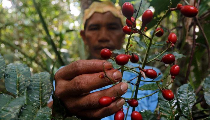 برازیل: ایمازونین قبائلی ٹوٹکے سے کورونا کا علاج کرنے لگے