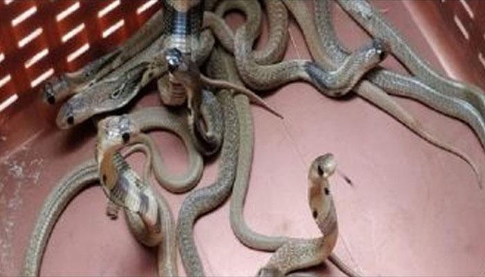 گھر کے ایئرکنڈیشنر سے 40 خطرناک سانپ برآمد