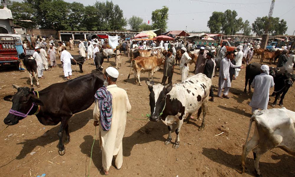 کے پی میں مویشی منڈیاں کھولنے کیلئے ایس او پیز تیار