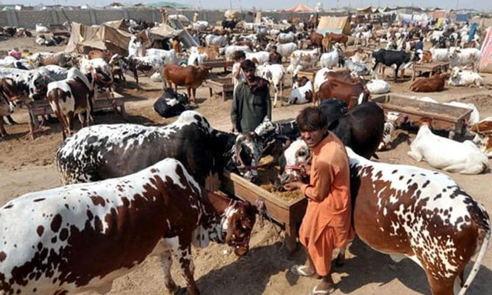 لاہور، ضلعی انتظامیہ نے مویشی منڈیوں کے لیے مقامات کی نشاندہی کردی
