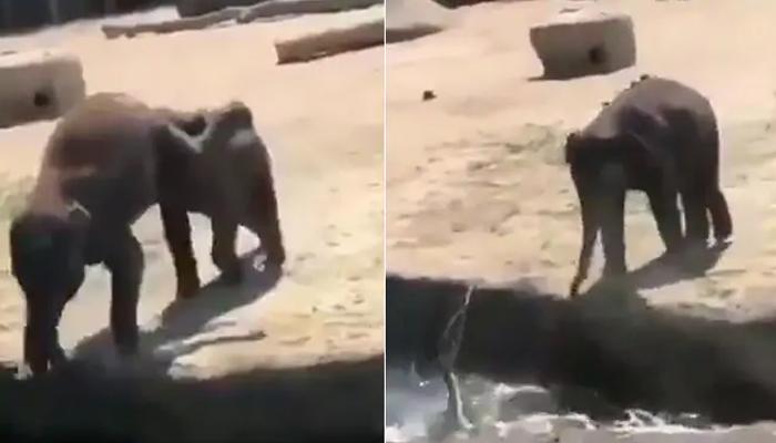 شرارتی ہاتھی نے دوست کو پانی میں دھکیل دیا