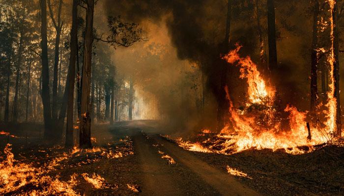 آسٹریلوی جنگلات آتشزدگی،3ارب سے زائد جانور ہلاک یا دربدر ہوئے