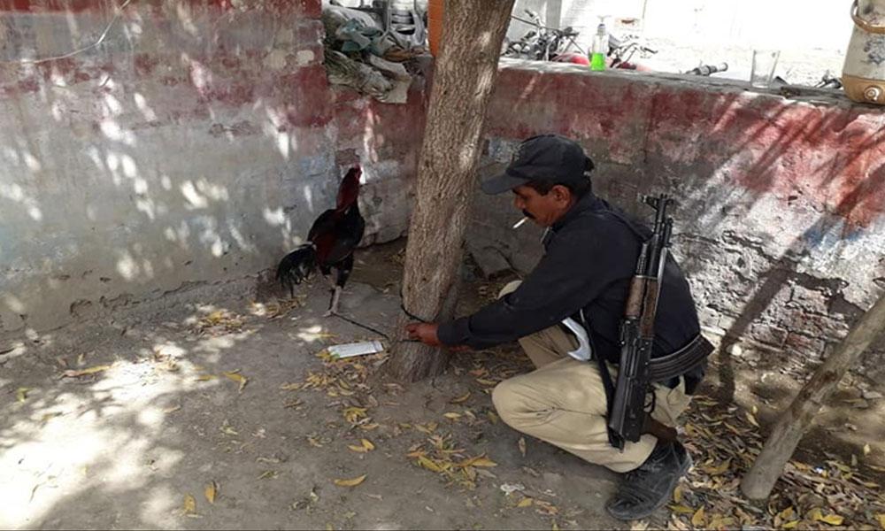 گھوٹکی: 8 ماہ بعد مرغا پولیس کی قید سے رہا