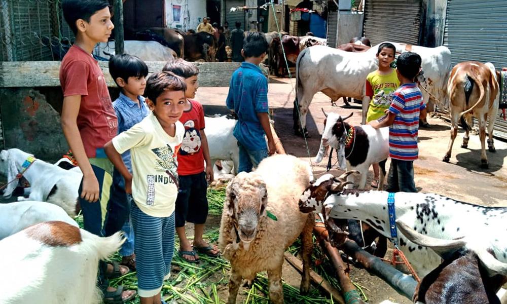 کراچی بھر میں عید البقر کی تیاریاں عروج پر