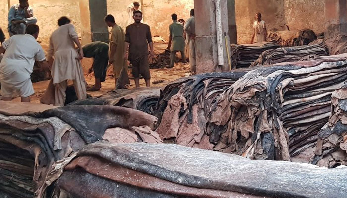 عید الاضحیٰ پر قربانی کے جانوروں کی کھالوں کی خریداری جاری