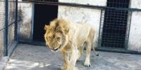 گھر میں شیر پالنے والے شہری کا بیان ریکارڈ
