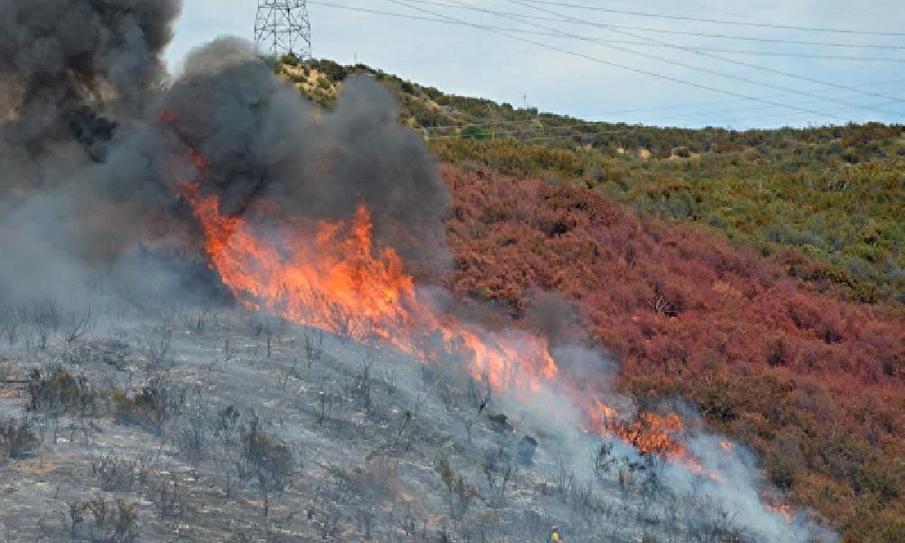 لاس اینجلس کے جنگلات کی آگ پھیل گئی
