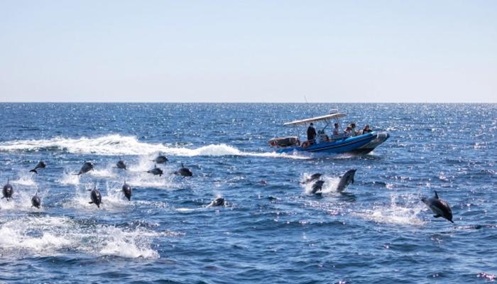 کیلی فورنیا: سمندر میں سیکڑوں شرارتی ڈولفنز کی مستیاں