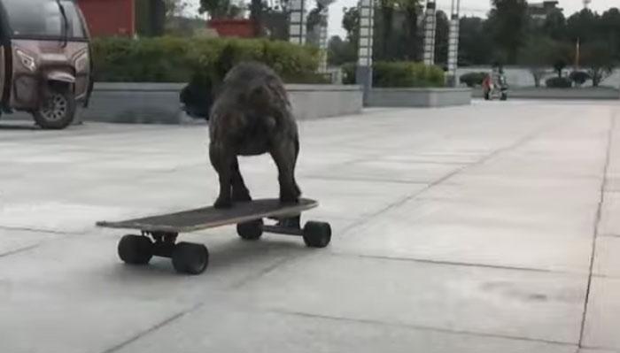 کتے بھی اسکیٹنگ کے ماہر نکلے!