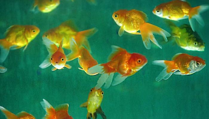 کیا مچھلی کو پیاس لگتی ہے؟