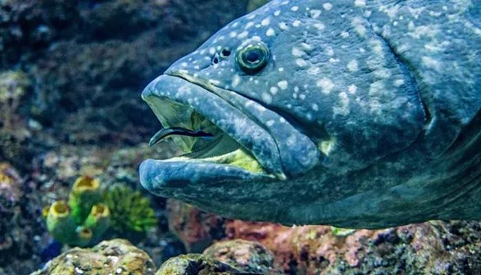 مچھلی کا ڈپریشن دور کرنے کیلئے سالگرہ منائی گئی