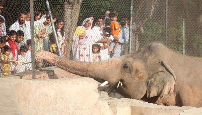 اسلام آباد: کاون ہاتھی کی رخصتی کی تیاریاں