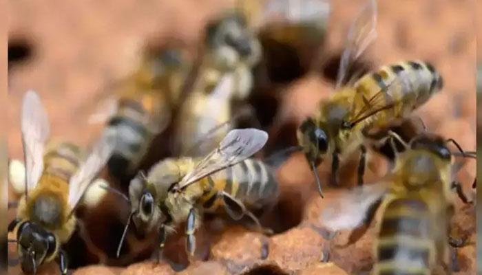 بھارت: شہد کی مکھیوں نے راہگیر پر حملہ کردیا