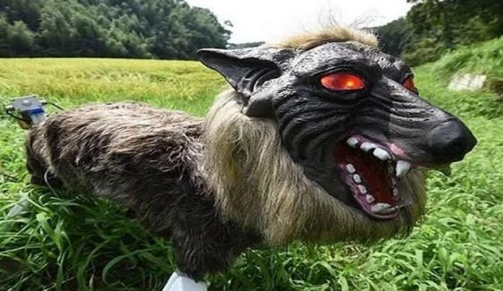 گاؤں میں'خوفناک بھیڑیا روبوٹ' کیوں نصب کیا گیا؟