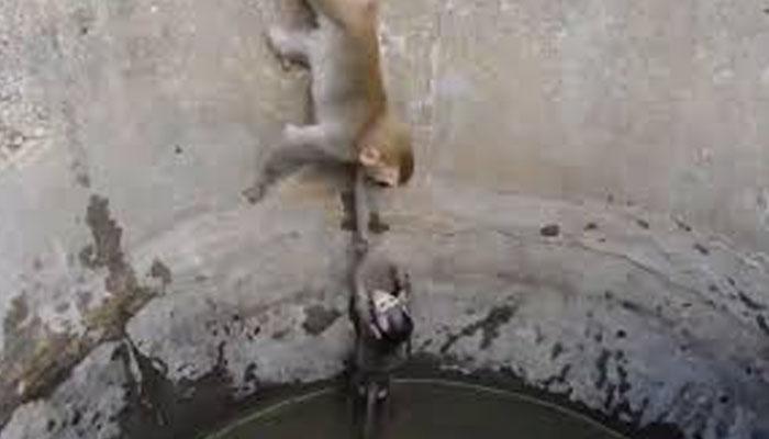 کنویں میں گرنے والے بچے کو بندریا نے کیسے باہر نکالا؟