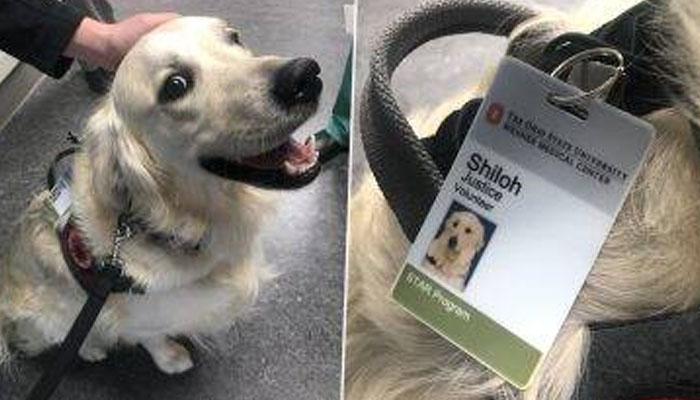امریکا،کتے کو یونیورسٹی میں ملازمت مل گئی