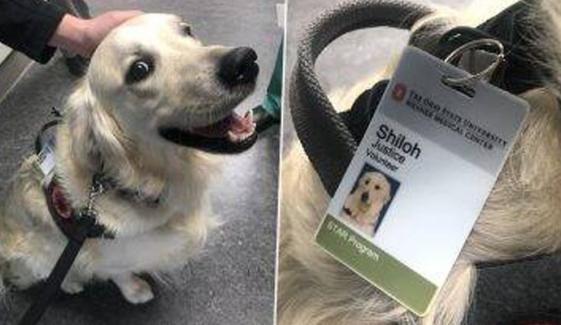 امریکا، کتے کو یونیورسٹی میں ملازمت مل گئی