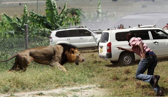 بھارت میں شیر نے گاؤں کے لوگوں پر حملہ کردیا