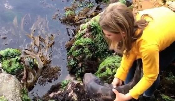 گیارہ سالہ بچی نے شارک کو ریسکیو کرلیا