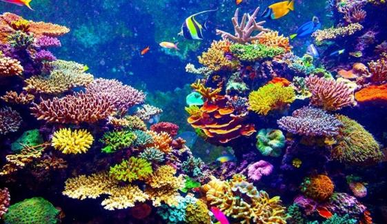 سمندری حیاتیاتی تنوع کا اہم جزو کورل ریفس یعنی مونگھے کی چٹانیں بھی ہیں