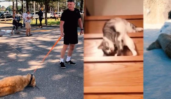 سست ترین جانوروں کی ویڈیو وائرل