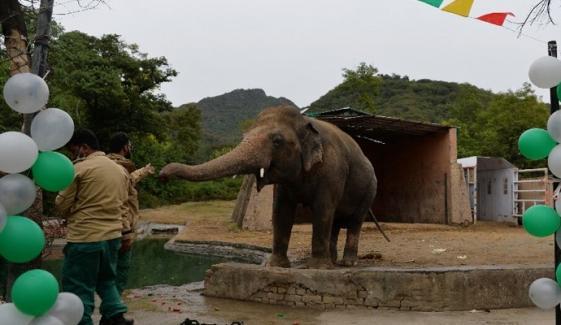 مرغرار چڑیا گھر کے ہاتھی کو کمبوڈیا بھیجنے کی تیاریاں مکمل