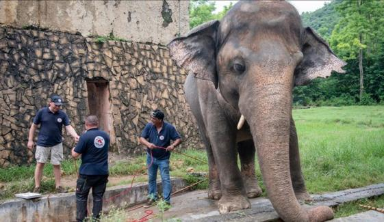اسلام آباد: کاون ہاتھی کو 35 سال بعد الوداع کہہ دیا گیا