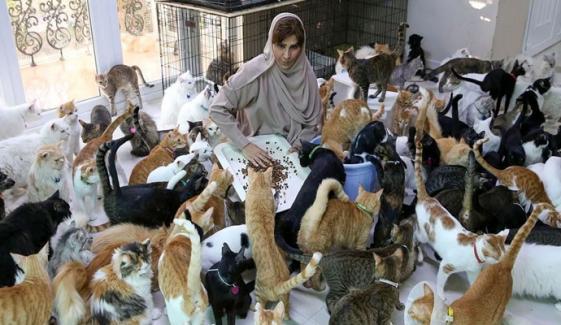 سیکڑوں بلیوں کے ساتھ زندگی گزارنے والی خاتون
