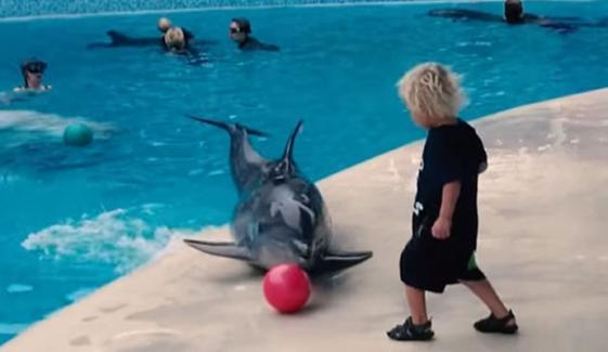 ڈولفن کی بچے کے ساتھ فٹبال کھیلنے کی ویڈیو وائرل