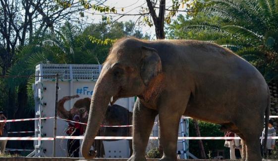 کاون ہاتھی کمبوڈیا پہنچ گیا