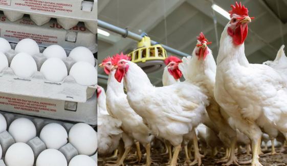 مرغی، انڈے خریدنے کا شفاف نظام نافذ