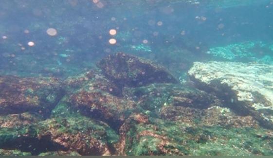 چرنا جزیرے کے قریب  کورل ریفس پر تحقیق شروع کردی گئی