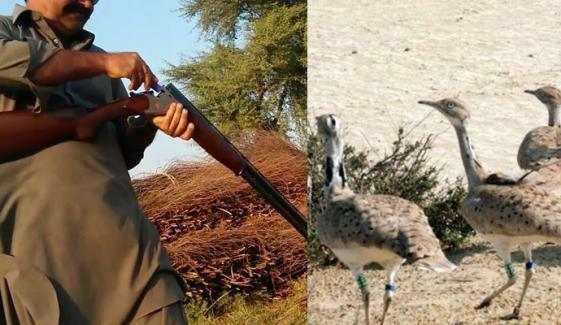 راجن پور میں وائلڈ لائف کی کارروائی، 2 شکاری گرفتار