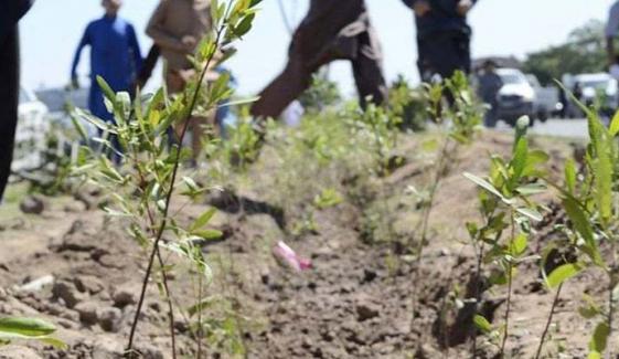بلوچستان میں پلانٹ فار پاکستان شجرکاری مہم کا آغاز ہوگیا