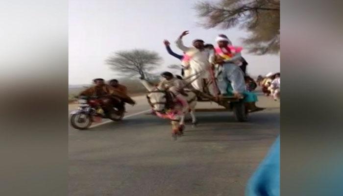 سرگودھا : گدھا ریڑھیوں کی ریس کے دلچسپ مقابلے