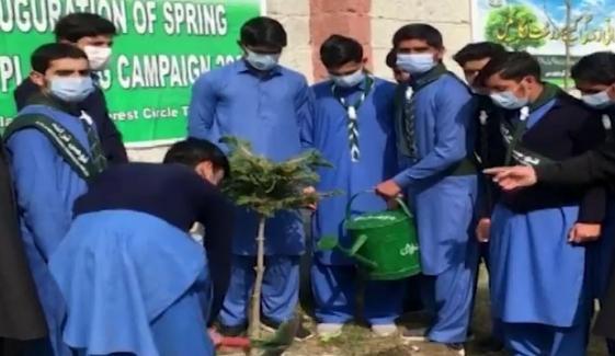 لوئردیر: یونیسیف کے تکنیکی تعاون سے سرکاری اسکولوں میں شجرکاری مہم