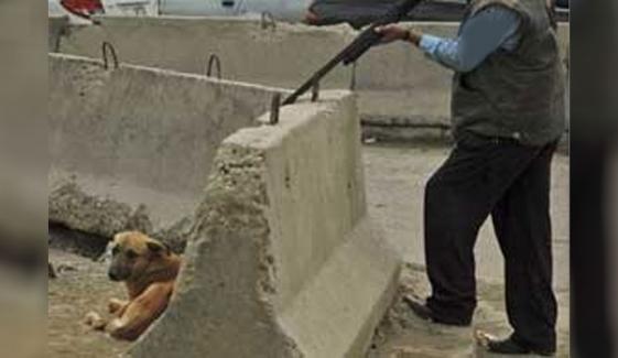 فیصل آباد: پاگل کتے کیلئے چلی گولی سے راہ گیر جاں بحق