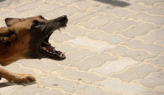 جامشورو: کتے کے کاٹنے سے 2 سالہ بچی جاں بحق