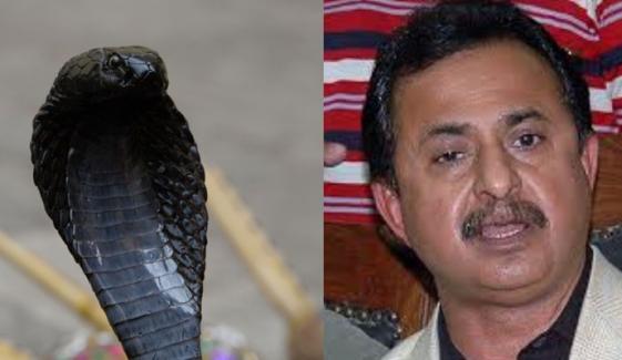 سانپ نکلنےکے معاملے کی تحقیقات کو بریک لگ گیا