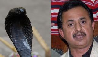 حلیم عادل شیخ کے سیل سے سانپ نکلنے کے معاملے کی تحقیقات کو بریک لگ گیا