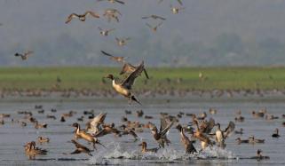 سندھ میں ہجرت کرکے آنے والے آبی پرندوں کی سالانہ گنتی مکمل