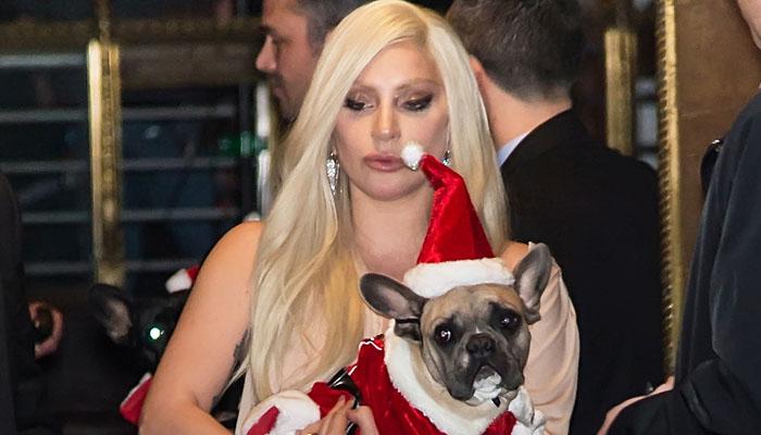 لیڈی گاگا کو لاپتہ کتے واپس مل گئے