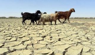 بلوچستان میں کم بارش کے باعث خشک سالی کے آثار نمودار