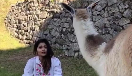 بھارتی اداکارہ کو اونٹ نے ڈرا کر بھاگنے پر مجبور کردیا