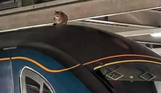 لندن؛ بلی ٹرین کی چھت پر چڑھ گئی، ٹرین سروس متاثر