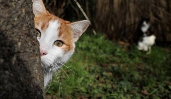 بلی کے بچوں کو گیس سے مارنے والا بے رحم شخص گرفتار